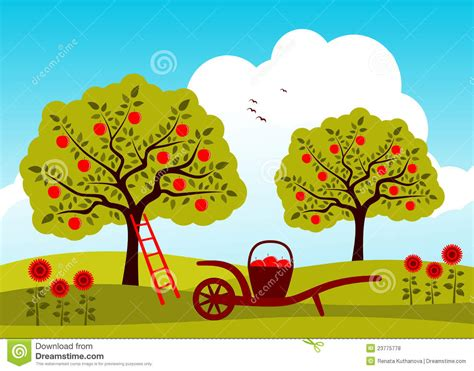 apple orchard illustration apple tree orchard stock vector illustration of flores