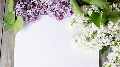 Lilac Tree Background Purple Flowers Backgrounds Card