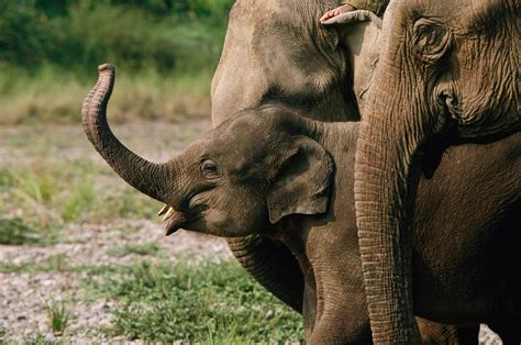 global wildlife summit fight  illegal ivory