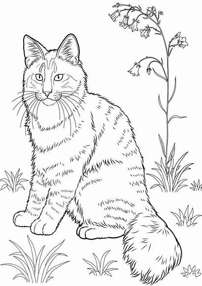 Coloring Cat Pages Kitten Realistic Sheets Tabby