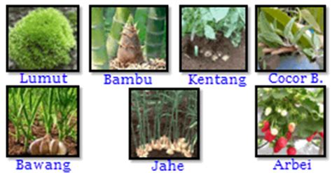 perkembangbiakan tumbuhan hewan media belajar