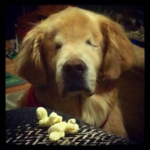 Blind therapy dog named Smiley will melt your heart - AOL News