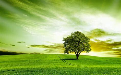 Green Tree Hd Wallpaper by Green Tree High Quality Hd Wallpaper Hd Wallpapers In
