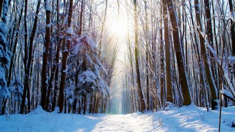 wallpaper winter forest paint snow  creative