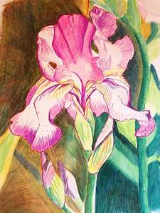 Back to Art: Iris Colored pencil