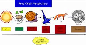 Earxagangnad  Food Chain Diagram For Kids