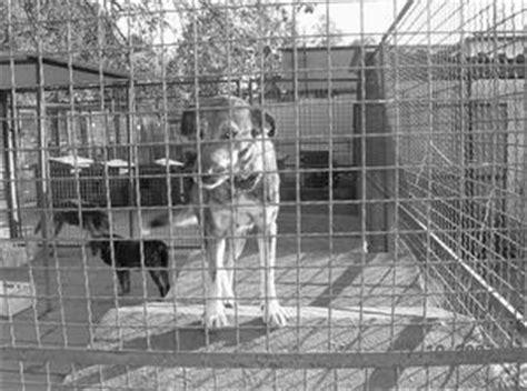 Hilfe Im Pflegefall Das Steht Ihnen Zu by Tierheim Chorzow