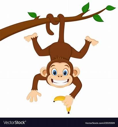 Monkey Hanging Branch Banana Singe Holding Aap