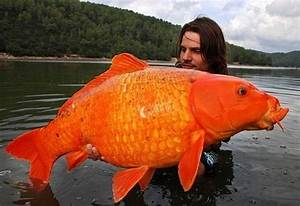 World U0026 39 S Largest Animals Alive Today