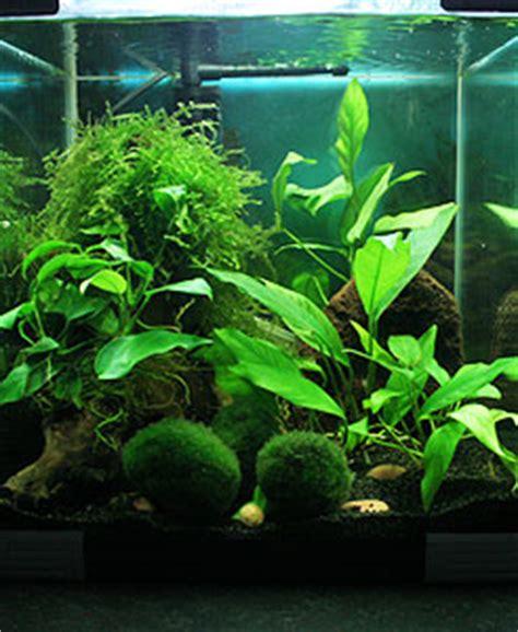 decorer un aquarium vide comment d 233 corer nano aquarium