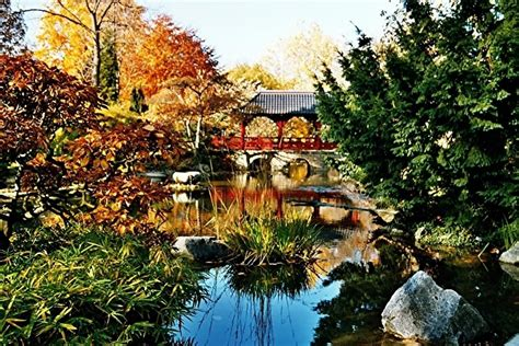 Japanischer Garten Leverkusen by Herbst Im Japanischen Garten K 246 Ln Leverkusen Foto Bild