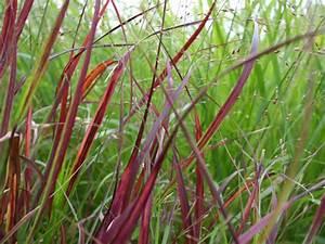 Gräser Für Den Garten : gr ser im garten ~ Michelbontemps.com Haus und Dekorationen