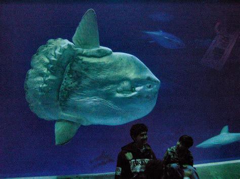 lea michele monterey bay aquarium