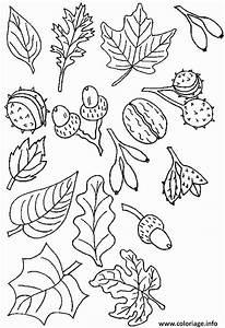 Feuilles D Automne à Imprimer : coloriage feuilles et fruits d automne dessin ~ Nature-et-papiers.com Idées de Décoration