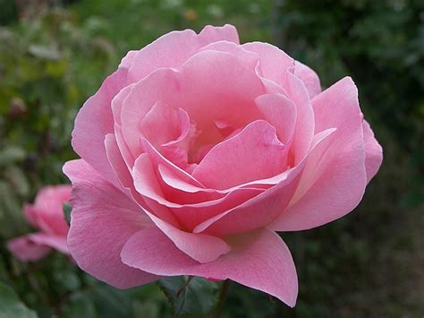 flower to bloom chiiizuka a flower blooming