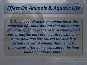 Noise pollution presentation