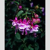 Ladybugs On Plants   736 x 909 jpeg 79kB