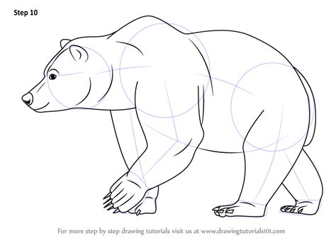 learn   draw  brown bear wild animals step  step