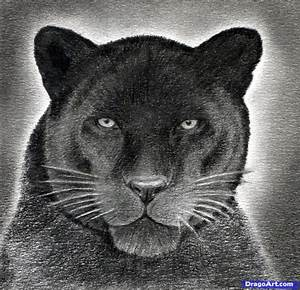 The gallery for --> Black Panther Pencil Drawing