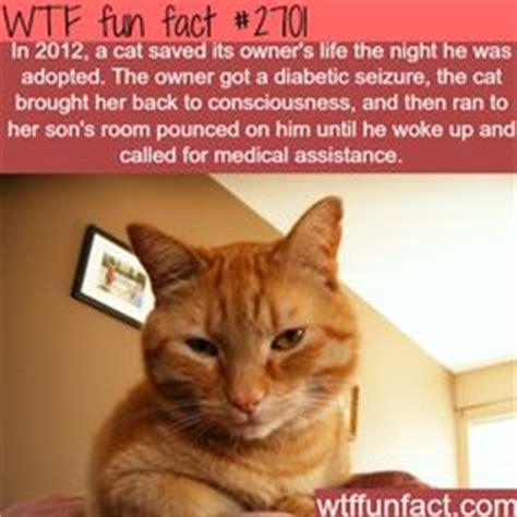 images  cat facts  pinterest cat facts cat