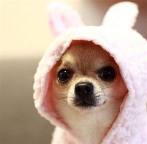 cute puppy  hood cute alcohol animals dog puppy