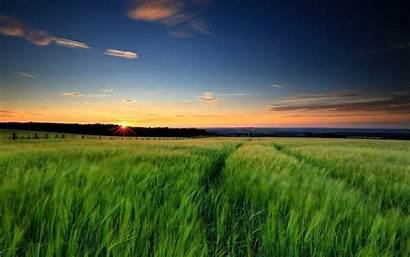 Grass Sky Nature Sunset Landscape Wallpapers Wheat