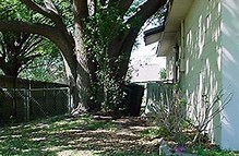 Image result for Free Picture Of Oak Tree Beside House