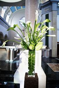 1000 Images About Arum Calla Lily On Pinterest Floral