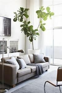 Plante De Salon : d coration s jour optez pour les couleurs neutres ~ Teatrodelosmanantiales.com Idées de Décoration