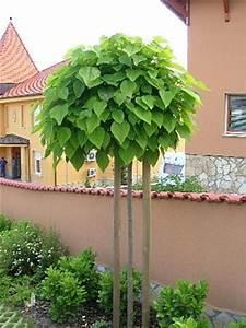 Catalpa Bignonioides Nana Pflege : monsterhaus b ume f r kleine g rten ~ Lizthompson.info Haus und Dekorationen