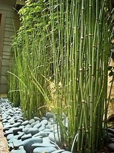 Bambus Vernichten Tipps : die besten 17 ideen zu bambus sichtschutz auf pinterest bambus als sichtschutz bambus ~ Whattoseeinmadrid.com Haus und Dekorationen