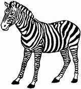 Zebra Coloring Colour Clipart Animals Awesome sketch template