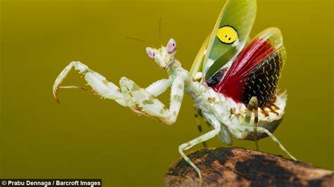 Martial Arts Masters Praying Mantis Practices Kung Fu Moves