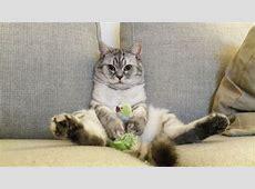 Katzen erziehen Worauf kommt es an bei der Katzenerziehung?