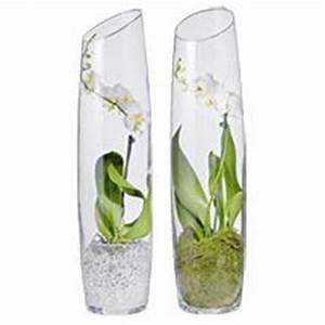 Orchideen Im Glas : orchideen im glas dekorieren deutsch well ~ A.2002-acura-tl-radio.info Haus und Dekorationen