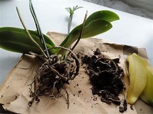 Orchideen Im Glas : re habitate orchideen im glas mal anders 2 ~ A.2002-acura-tl-radio.info Haus und Dekorationen