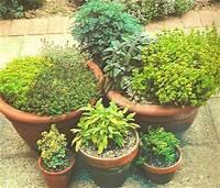 potted herb garden Potted Herb Garden, Potting Herbs, Herb Pot Garden