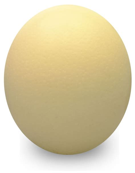 eggshell color images