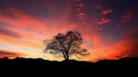 2048x1152 Free Hd Wallpaper by Wallpaper 2048x1152 Sunset Tree Clouds Sky