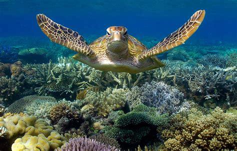 Great Barrier Reef Snorkelling Guide