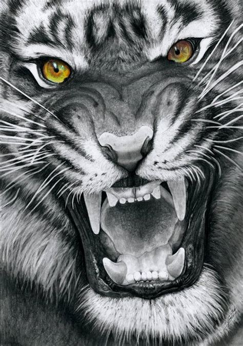 Tiger Drawing Black White With Golden Eyes
