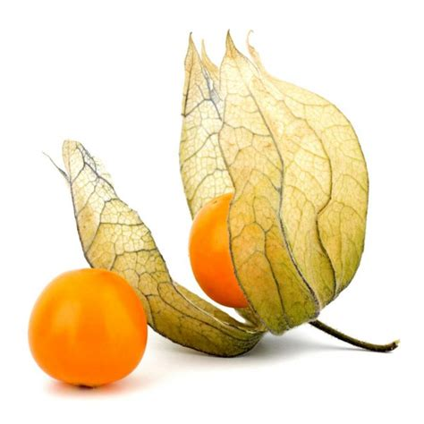 physalis assortment special fruit
