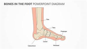 Bones In The Foot Powerpoint Diagram