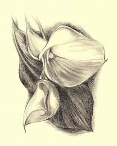 Calla Lilies Drawing by MM Anderson