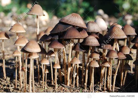 Image Of Mushroom Garden