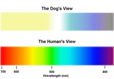 does shades of light ever have sales can your dachshund see color my mini doxie