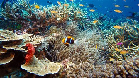 Hors Série#1 Plongée île Maurice 2014