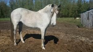 Combien De Chevaux : comment estimer le prix d 39 un cheval ~ Medecine-chirurgie-esthetiques.com Avis de Voitures