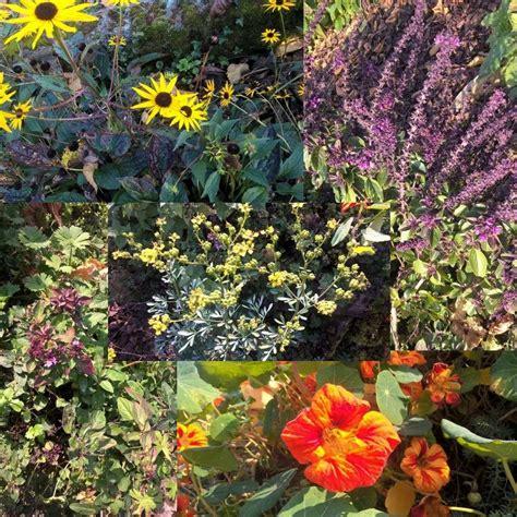 Garten Pflanzen Schmetterlinge by Pflanzen F 252 R Bienen Schmetterlinge Co Eine 220 Bersicht