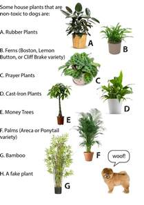 cat safe plants jess the miscellaneous july 2015